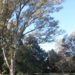 Countryside Escapade – Los Cardales